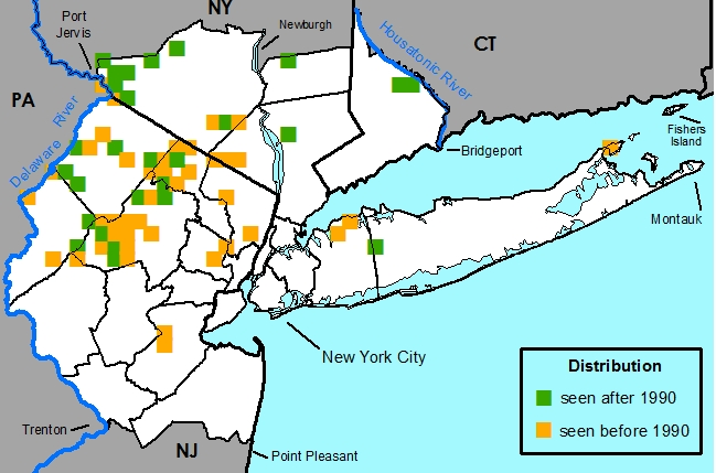Gay New York Map.New York Metropolitan Flora Polygala Paucifolia Gay Wing Milkwort
