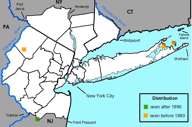 Map Of Southern New York.New York Metropolitan Flora Luzula Bulbosa Southern Woodrush